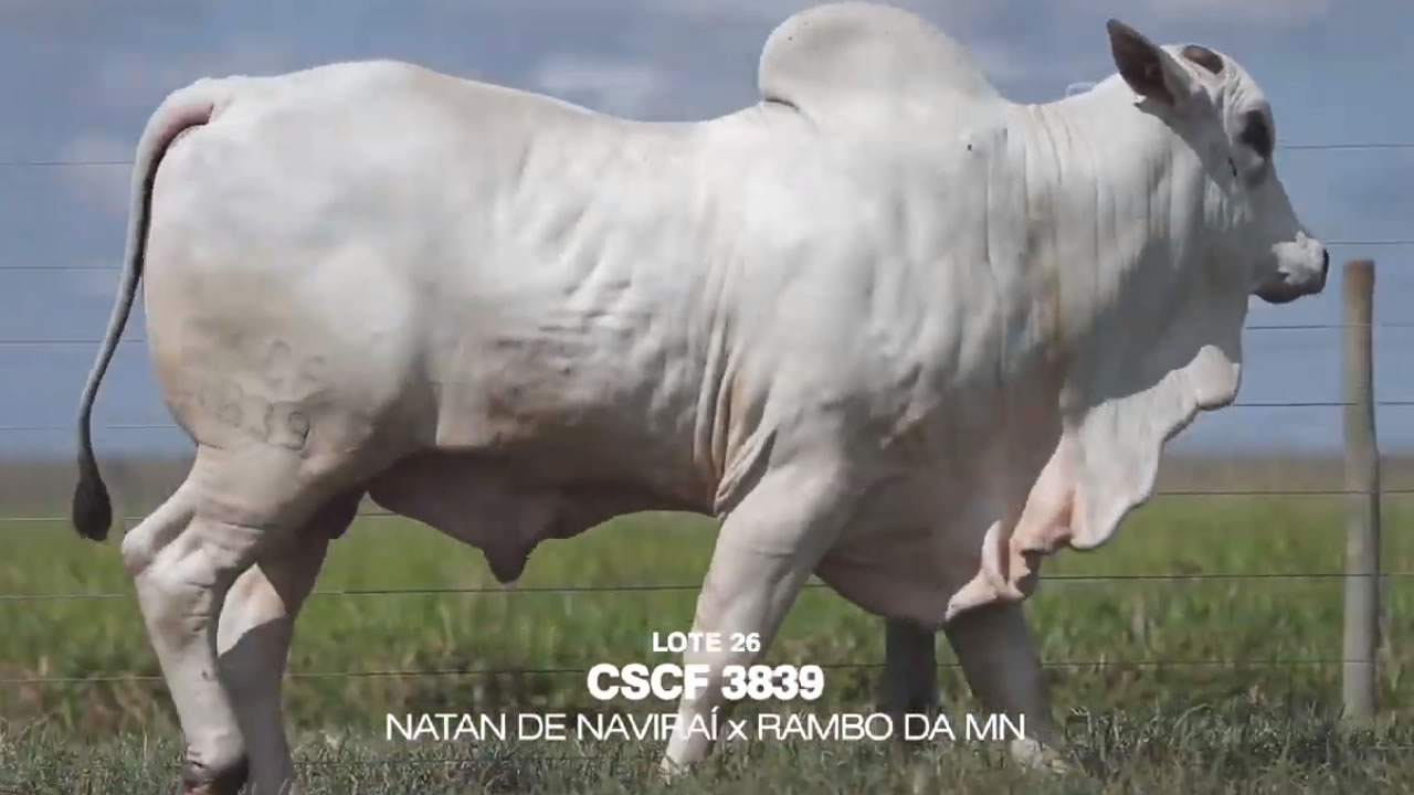LOTE 26 CSCF 3839