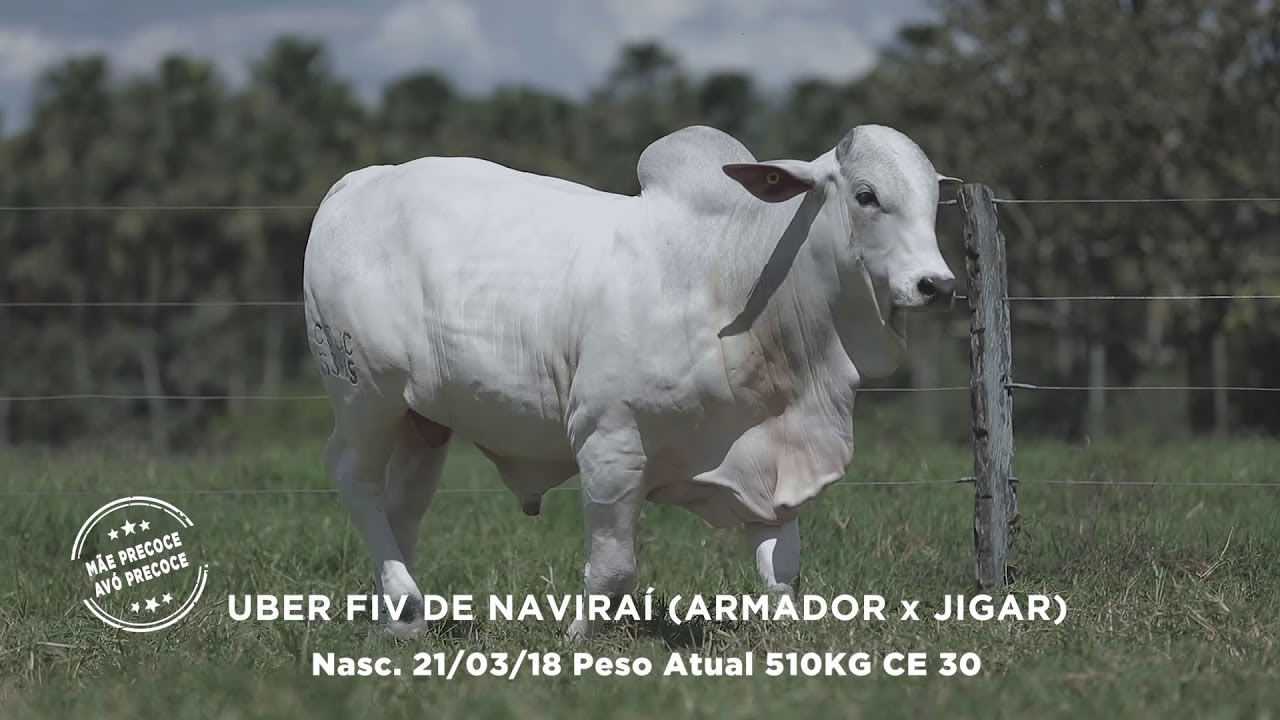 Lote - 21