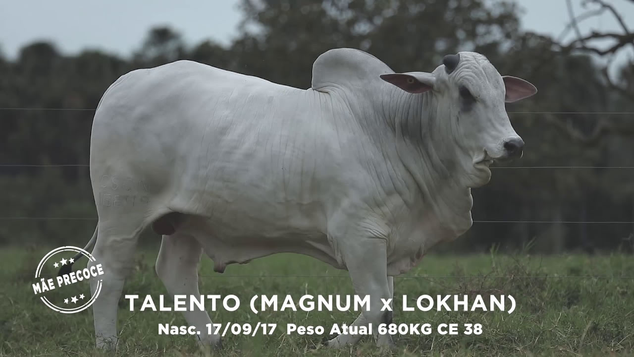Lote - 27