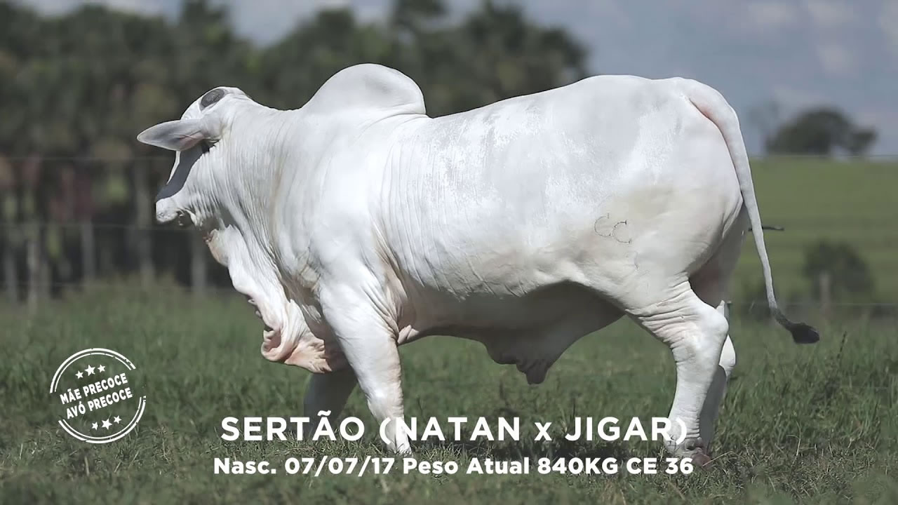 Lote - 30