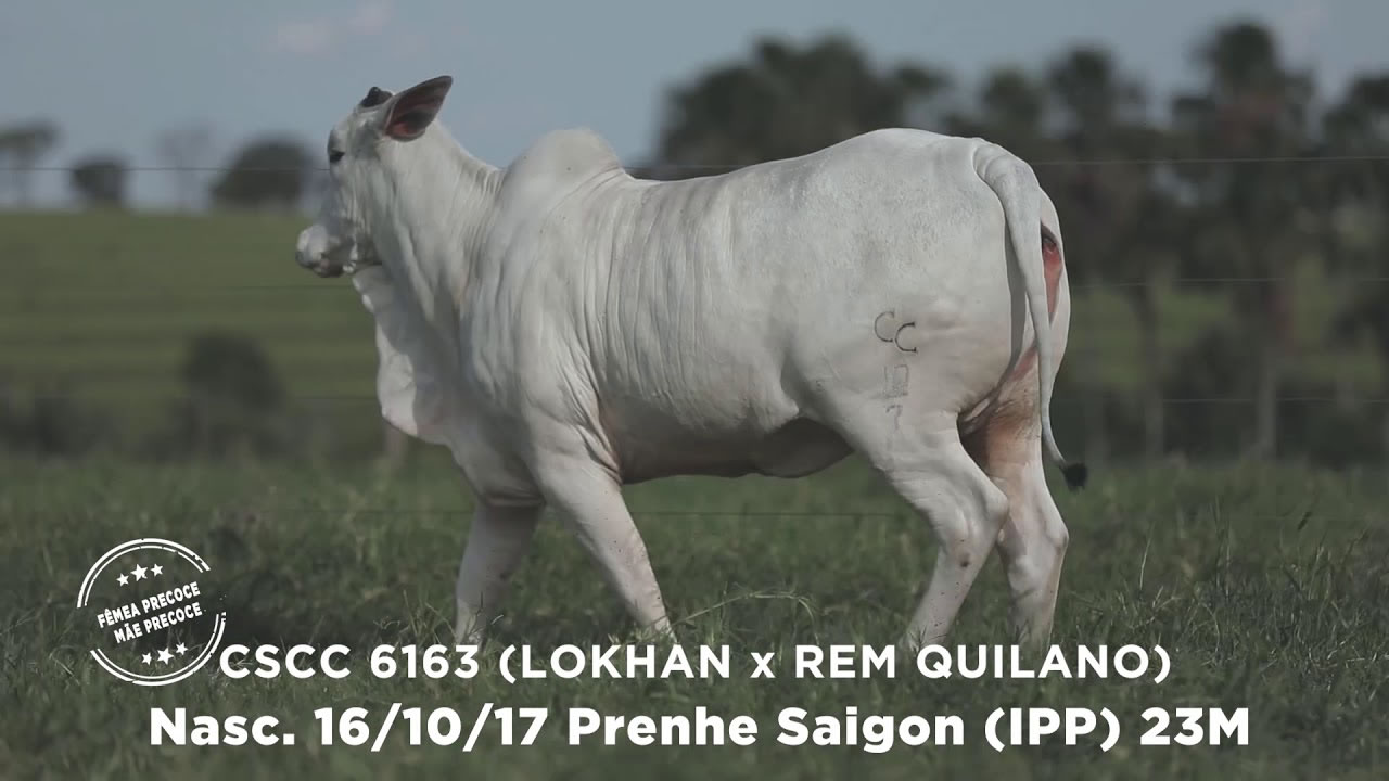 Lote - 40
