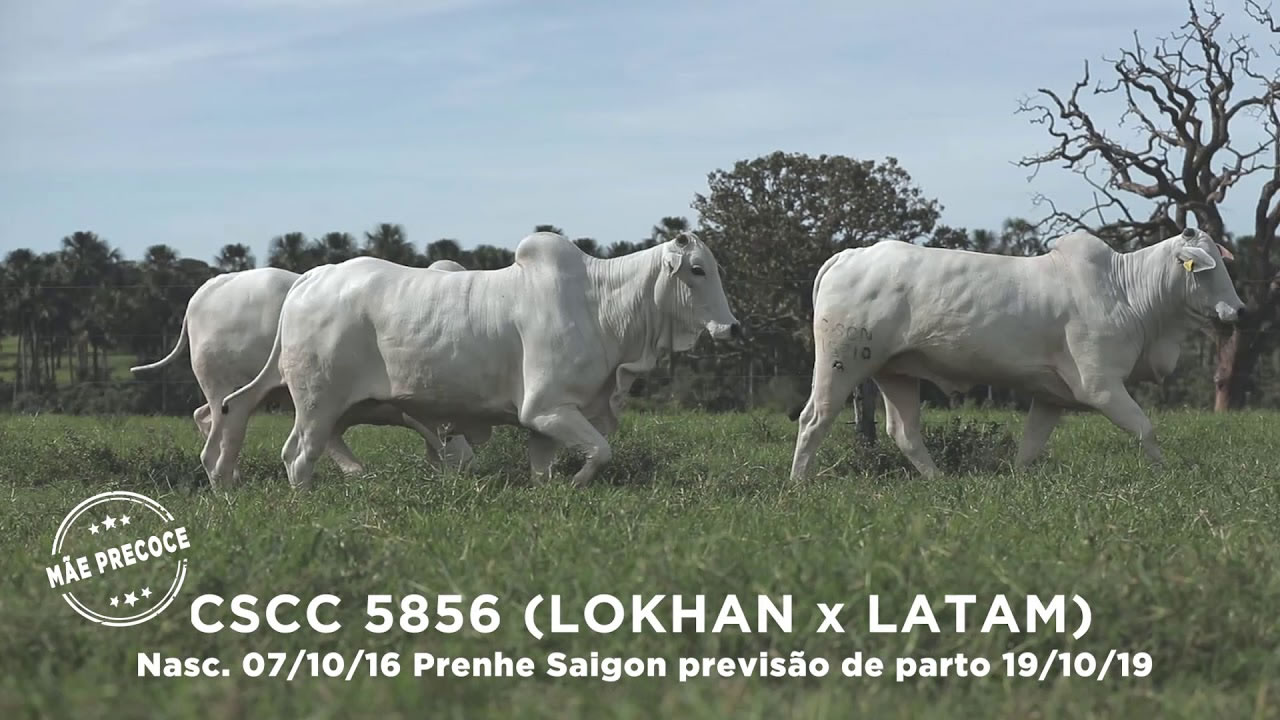 Lote - 51