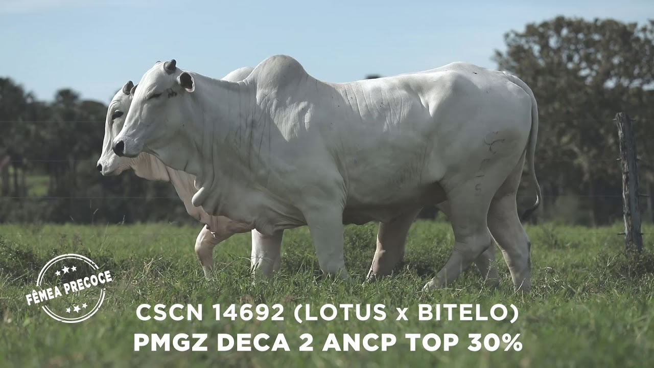 Lote - 67