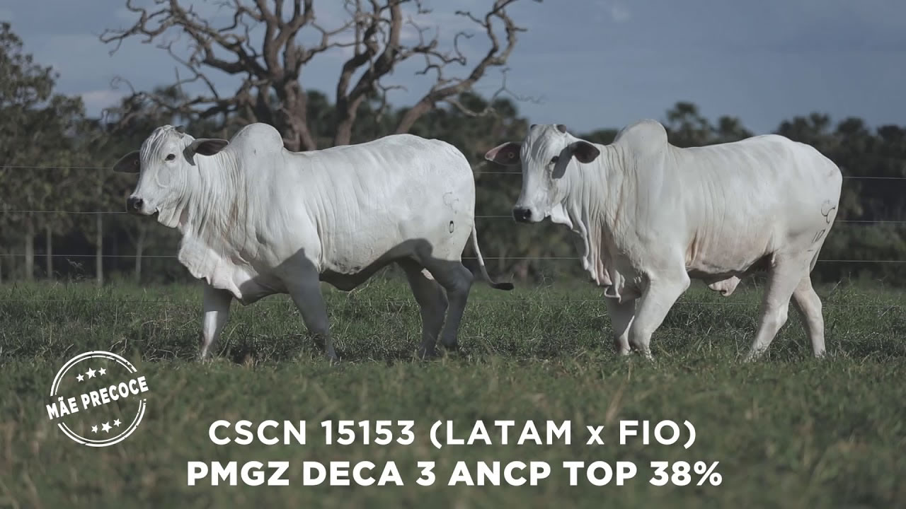 Lote - 69