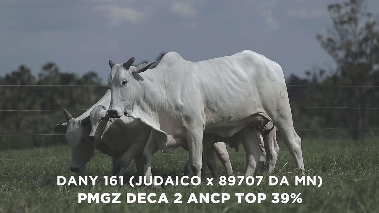 Lote - 71