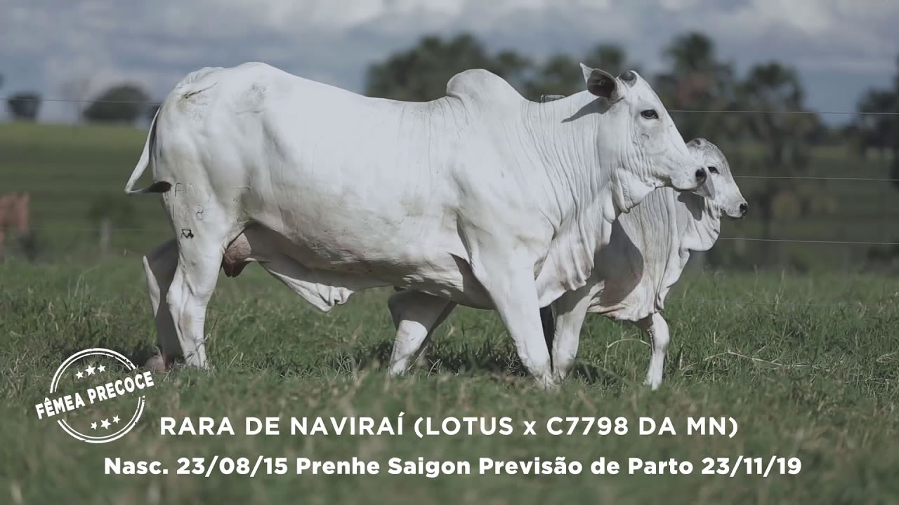 Lote - 79