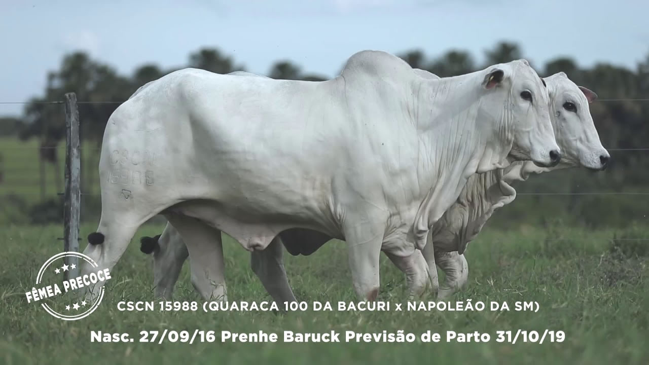 Lote - 84